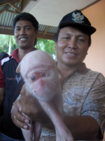 http://poconglapar.files.wordpress.com/2010/07/babi4danhukumtuawatulinqr5.jpg